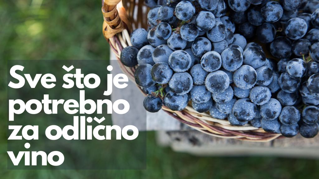 sve za vino slika grožđa