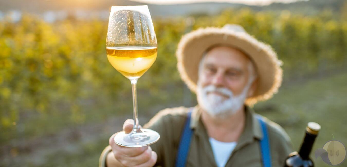 proizvodnja belog vina