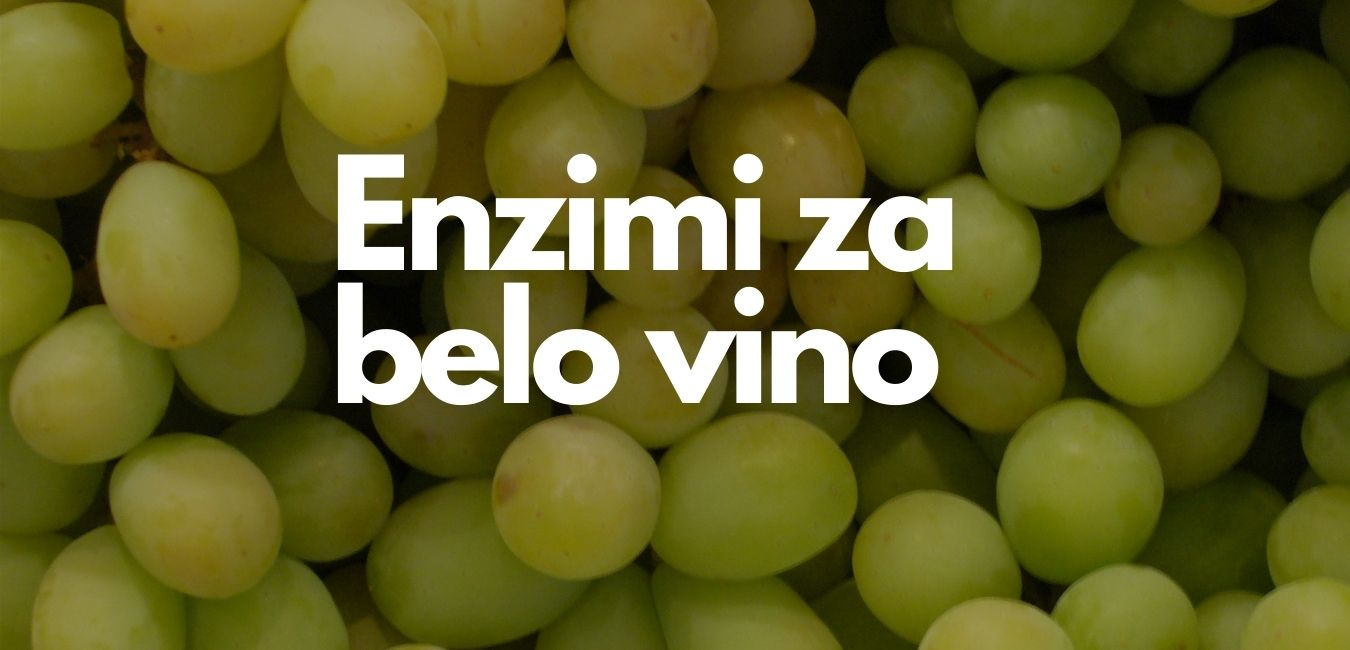 enzimi za belo vino
