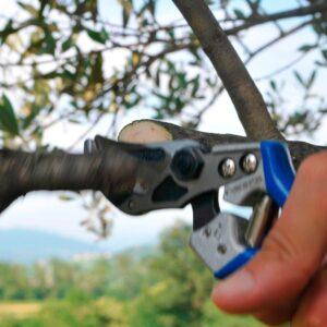 orezivanje voca makaze